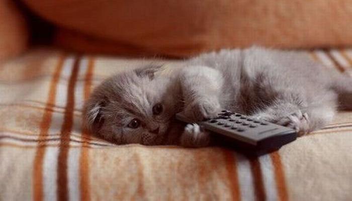 cat marketing channels